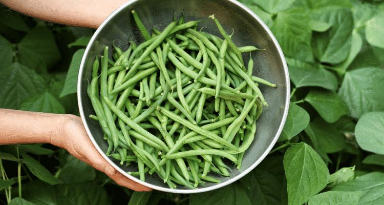keto diet beans
